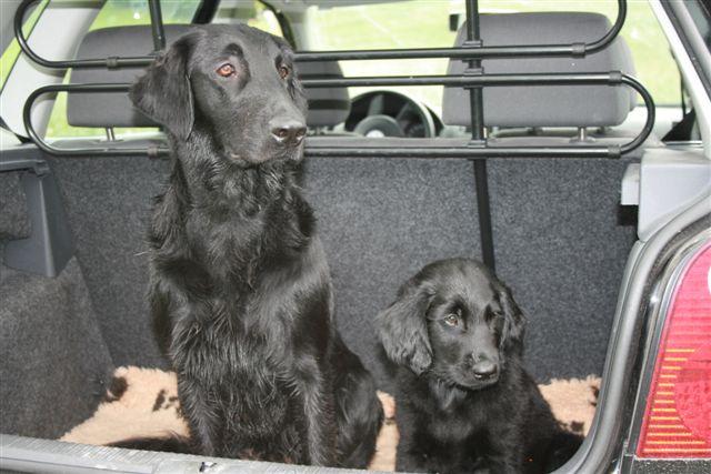 Luna und Neil im Kofferraum
