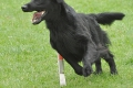 Whispering Wind Agility-Seminar 2011 - Neil in Action