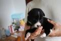 Lee, 3 Wochen alt