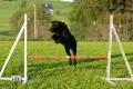 Lunas erstes Agility-Training