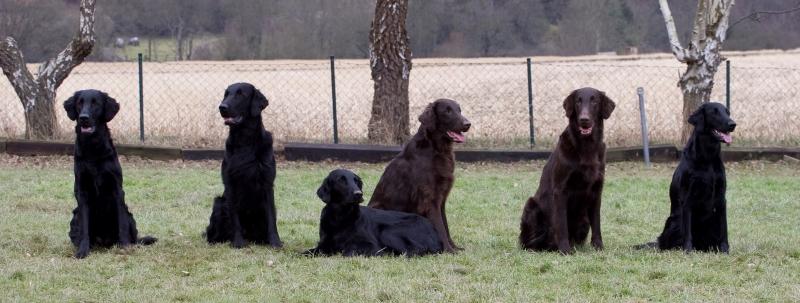 Whispering Wind F-Wurftreffen 2011 - Neil mit seinen 4 Geschwistern und Mama Whisper