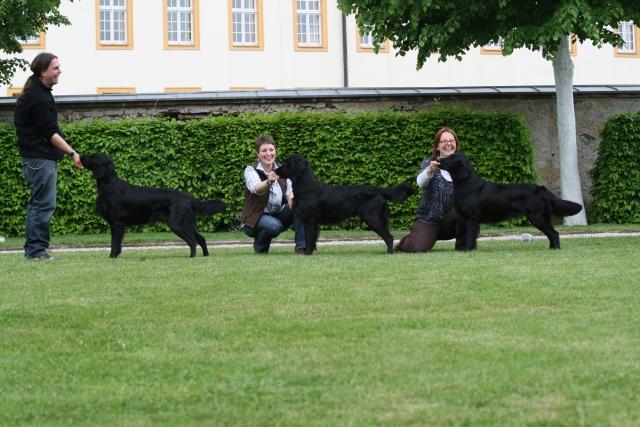 Sieger Zuchtgruppe bei der ÖRC-Clubschau 2010 in Melk